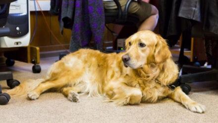 На работу с собакой: для чего российские компании начали пускать домашних животных в офис